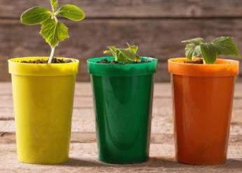 semena i rassada 2