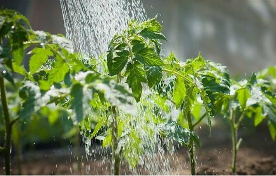 поливаем водой с добавлением корицы