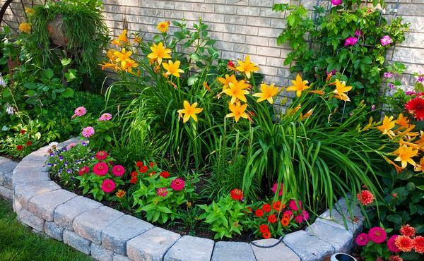цветы в клумбе