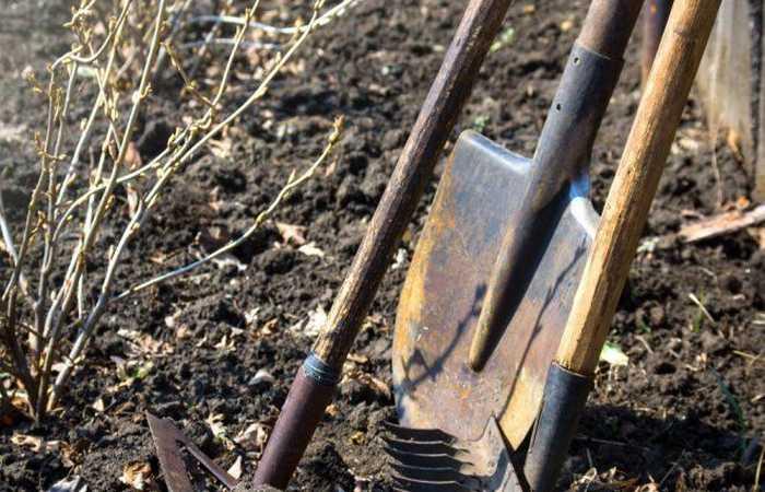 Как подготовить огород к зимовке