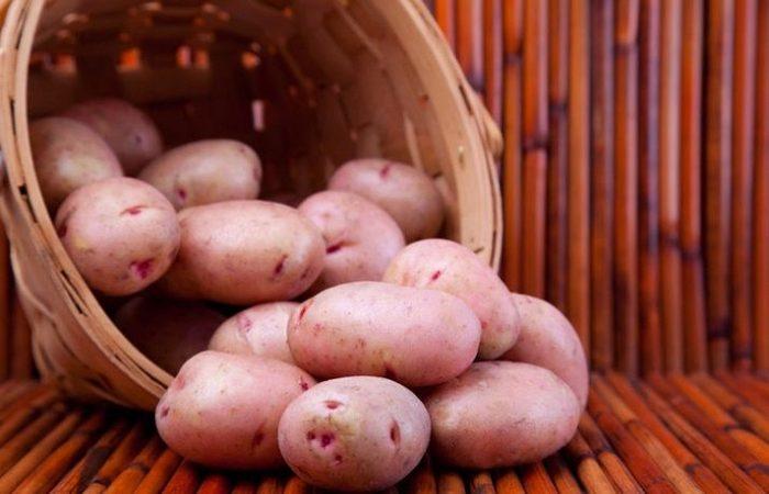 Картофель сорта Хозяюшка - Сажанец