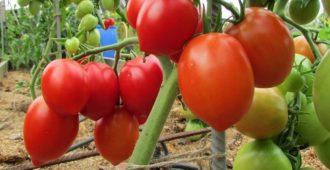 томаты на грядке