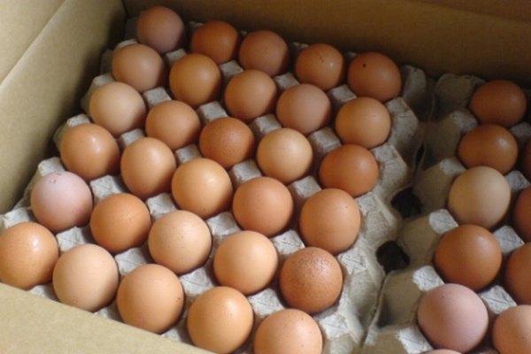 При какой температуре хранят яйца для выведения цыплят