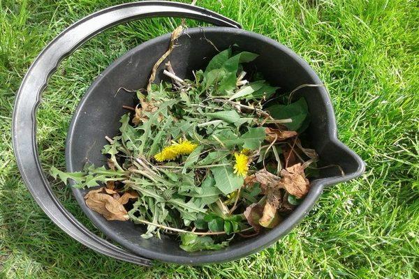 трава для удобрения