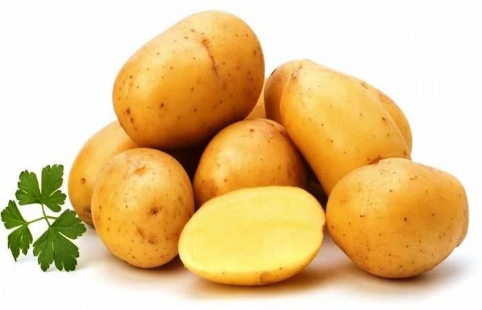 """Сорт картофеля """"Ласунок"""""""