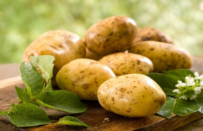 """Сорт картофеля """"Венета"""""""