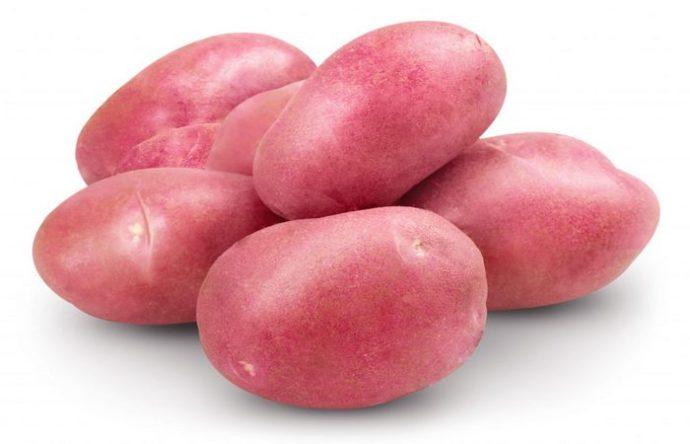 """Сорт картофеля """"Красавчик"""""""