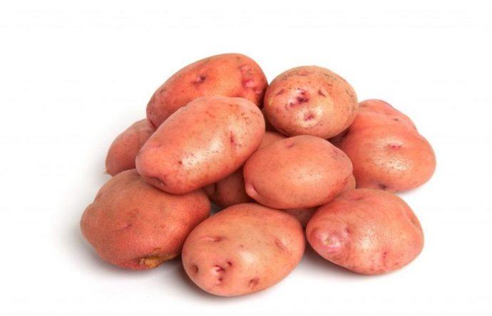 """Сорт картофеля """"Снегирь"""""""