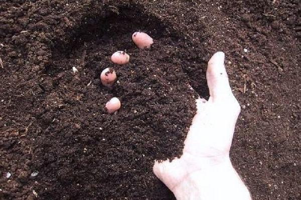 почва под огурцы