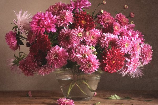 хризантема в вазе