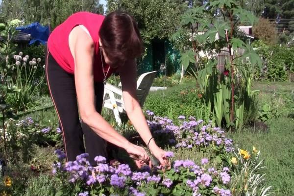 сбор семян цветов