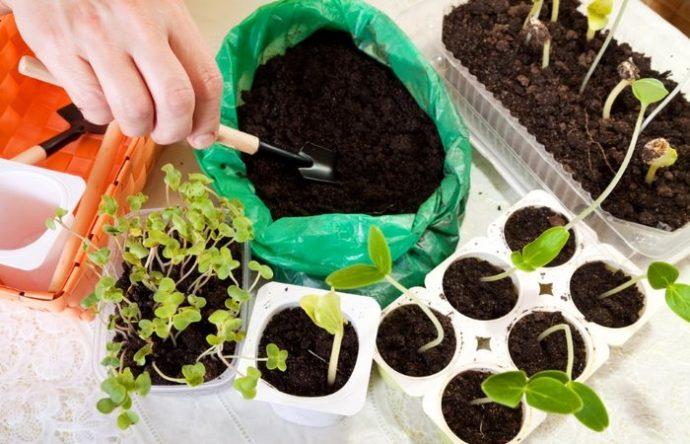 грунт для рассады капусты приготовить своими руками
