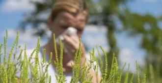 Аллергические растения