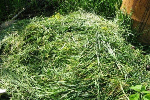 скошенная трава для мульчи
