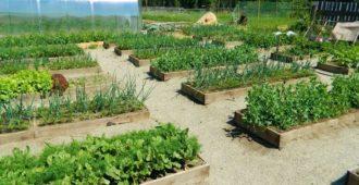 засаженный огород