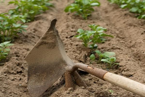 окучивание вручную картошки