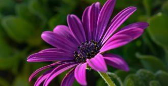 Как стимулировать цветение цветов