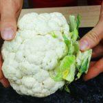 Семена цветной капусты своими руками