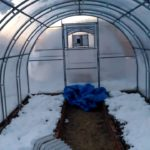 Закидывание снега в теплицу