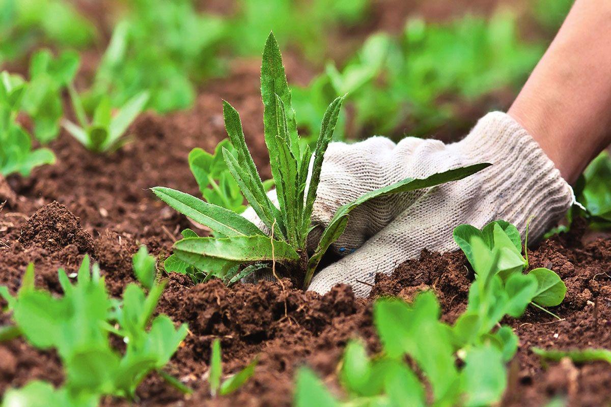 Борьба с сорняками в огороде