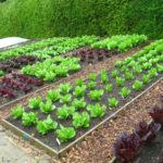 Урожайность огорода